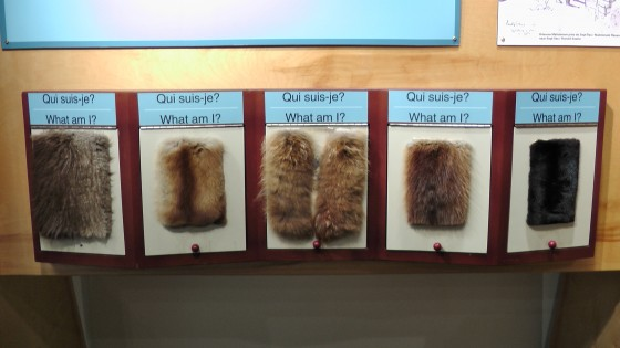 Different types of animal skins.