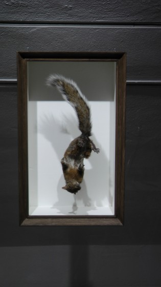 Kate Puxley, Senza Terra: Squirrel, Naturalized Squirrel