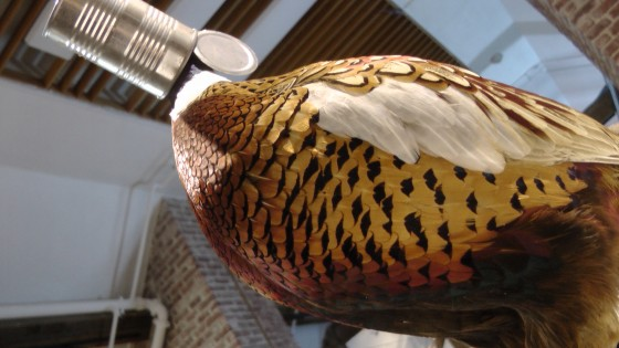 Kate Puxley, In Style, 'Habitat' series, Naturalized pheasant, aluminum can, bottle cap